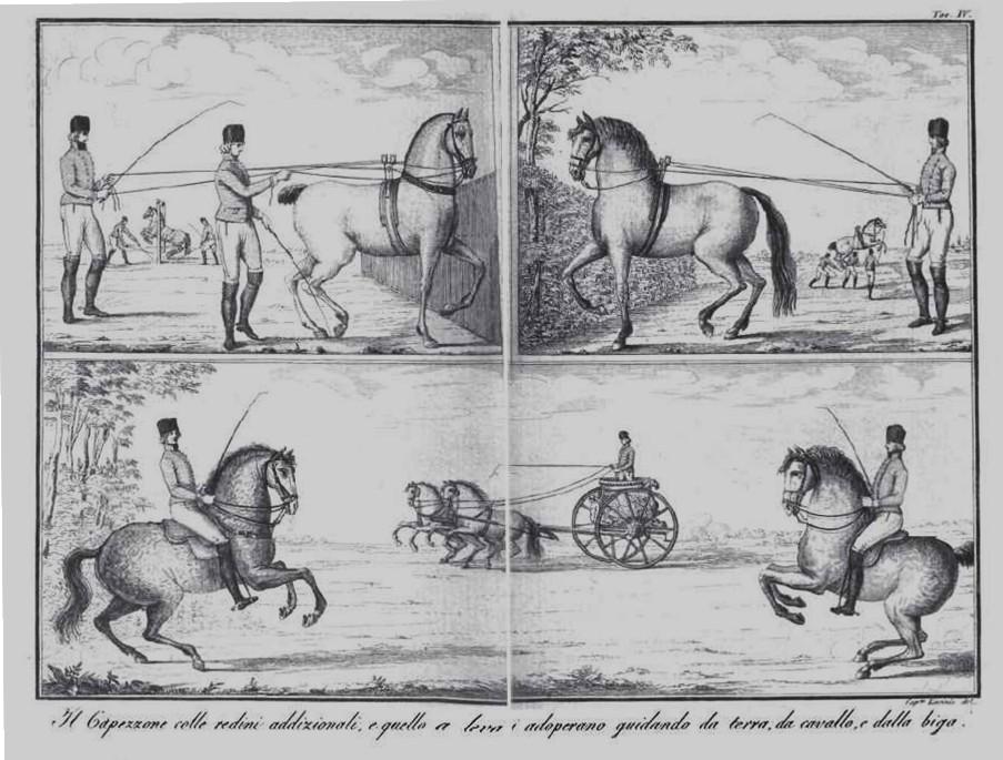 Incisione da la Scuola Equestre di Federico Mazzucchelli (1805)