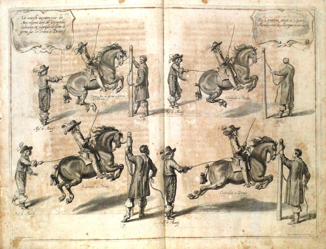 Contrariamente a una credenza diffusa, i salti di scuola avevano una finalità estetica e non militare. William Cavendish, duca di Newcastle, La methode et inuention nouvelle de dresser les cheuaux, 1658, tav. 30