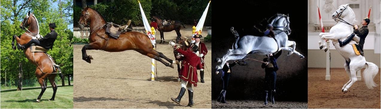 I salti praticati in epoca rinascimentale differivano leggermente da quelli eseguiti oggi nelle quattro grandi accademie di Saumur, Lisbona, Jerez e Vienna
