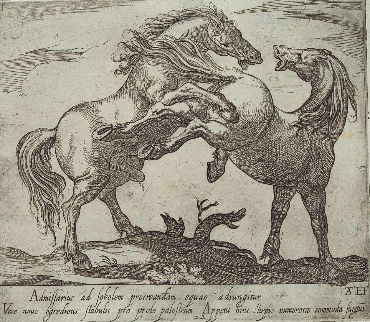 There is something primordial and savage in the powerful instincts that dominate the horse. Antonio Tempesta, Stallion who attacks a mare, 1590