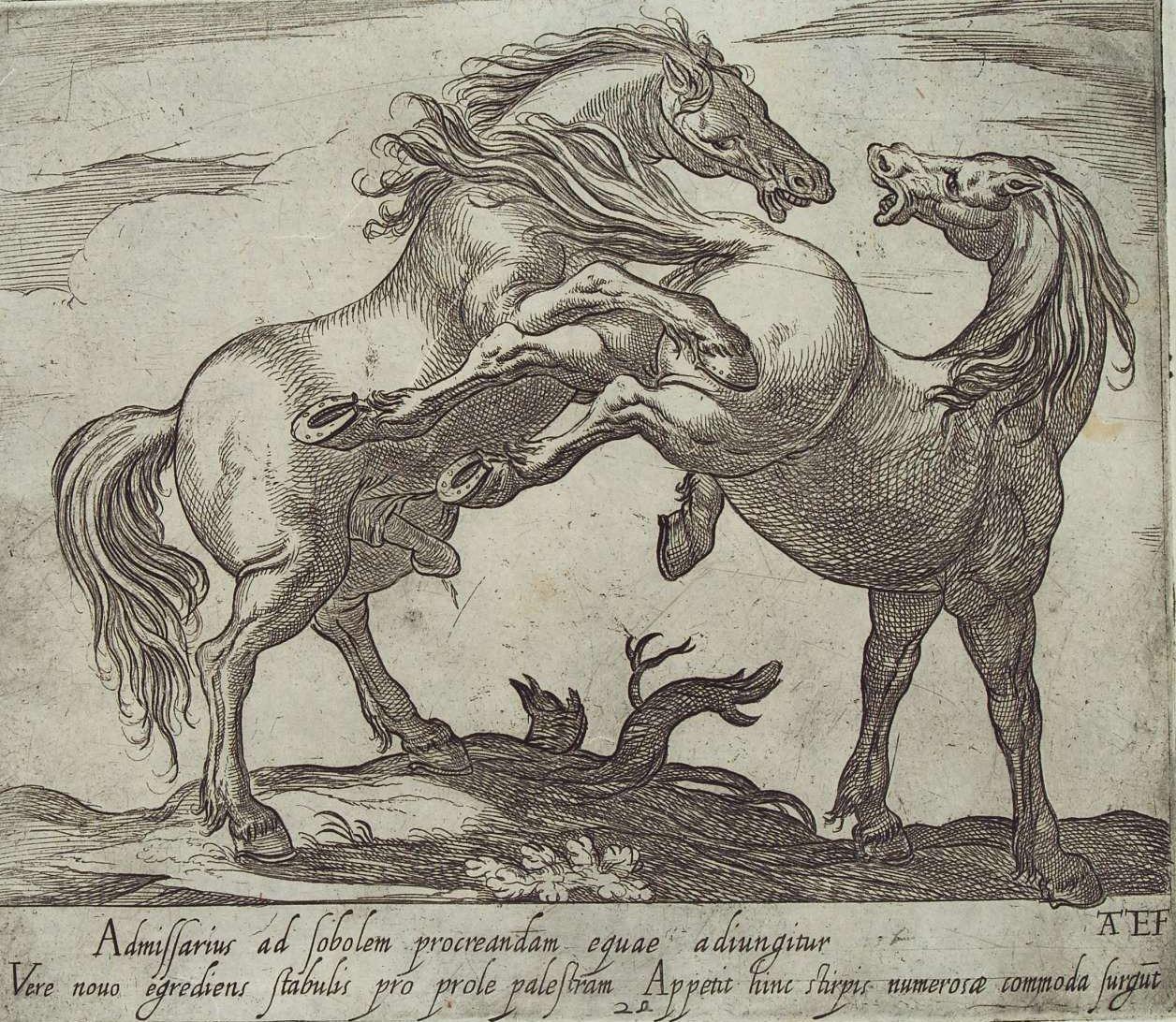 C'è qualcosa di primordiale nei potenti istinti che dominano il cavallo. Antonio Tempesta, Stallone che aggredisce una giumenta, 1590.