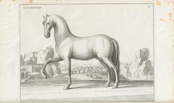 Neapolitan Horse, in baron D'Eisenberg, Description du Manege Moderne dans sa perfection, Paris, 1727, tav. IV