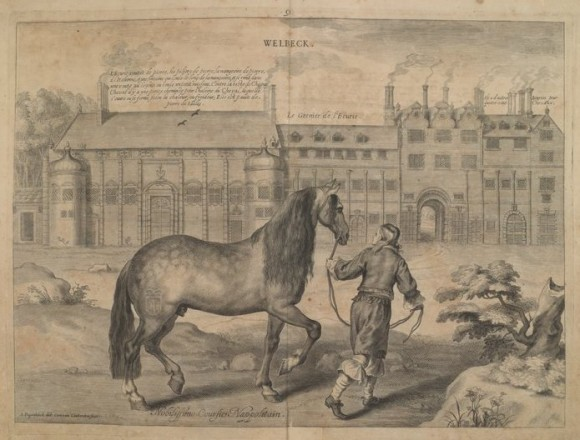 Neapolitan courser  William Cavendish of Newcastle, Méthode et invention nouvelle dans l'art de dresser les chevaux, 1658