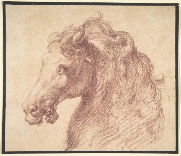 Anonimo italiano, Studio della testa di un cavallo, circa la metà del XVI sec.  © Metropolitan Museum of Art - New York