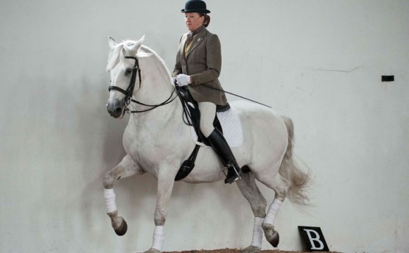 Sylvia Loch riding (picture from the Classical Riding Club website)