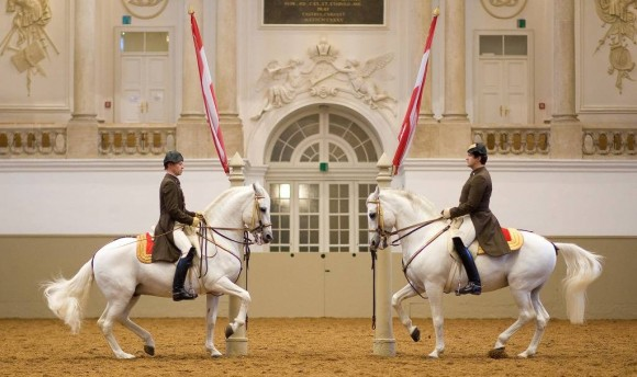 Pas de deux in the Spanish Riding School of Vienna